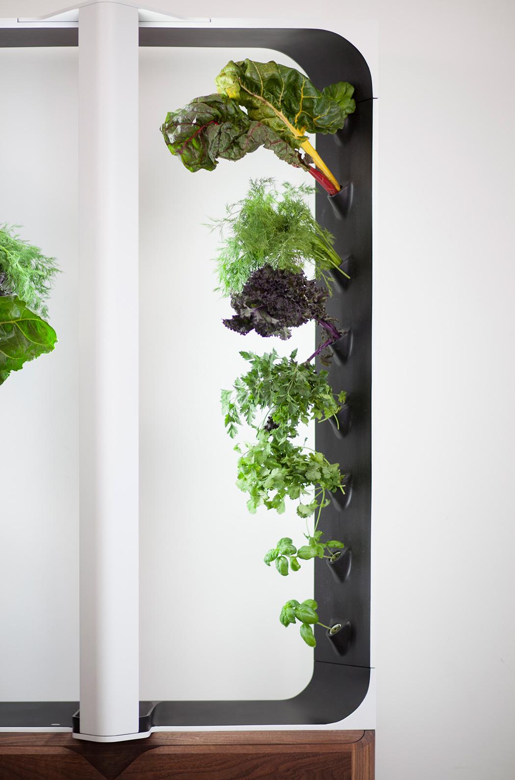 hidroponikus-mini-farm-a-nappaliban-noko-09.jpg