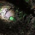 Hajnali horror: a zöld krokodil majdnem megölte a sünt!