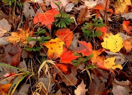 """Képtalálat a következőre: """"őszi képek pinterest"""""""