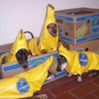 A banán porciózása
