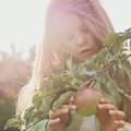 Az első és egyetlen almánk a fán