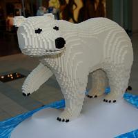 Megint ellopták a jegesmedve ánuszát Bukarestben!
