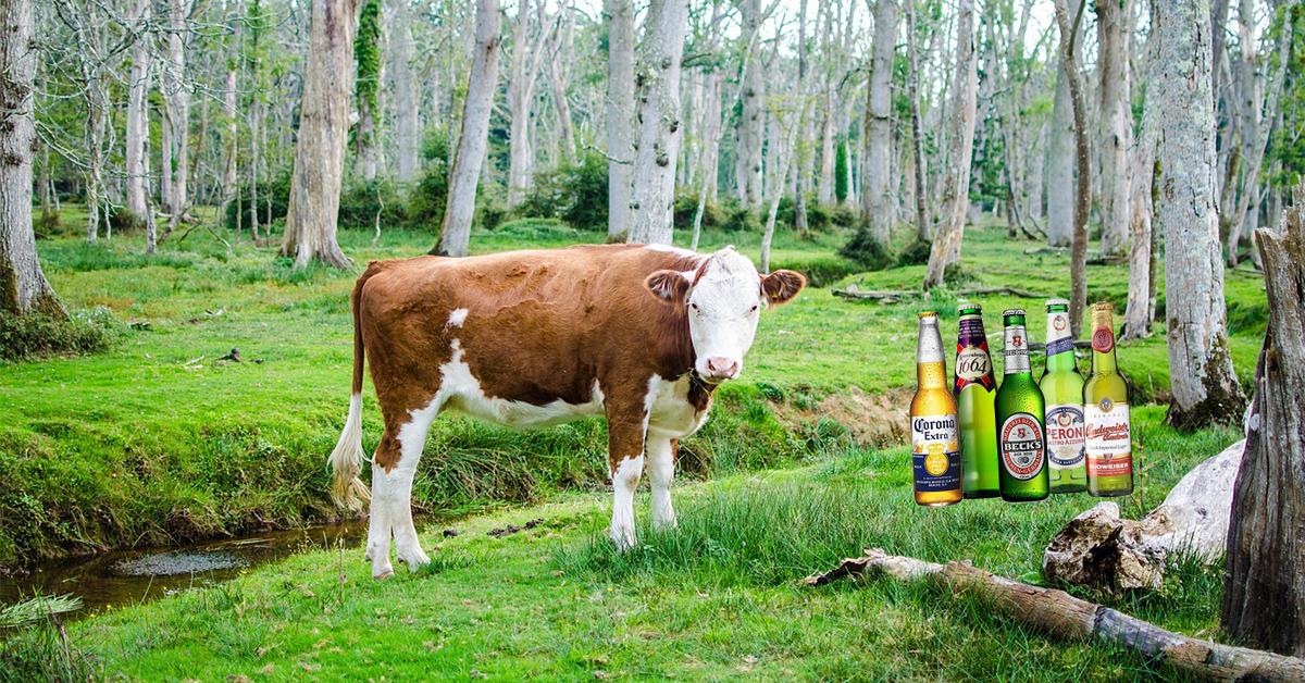cow_beer.jpg