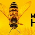 Markus Imhoof - A méhek világa