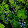 #visual #green #nature #plants #dimension #microcosmos #scifi #discovery #colony #badits