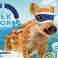 Kreatív programtervezés a Magyar Természetjáró Szövetség rendezvényeire