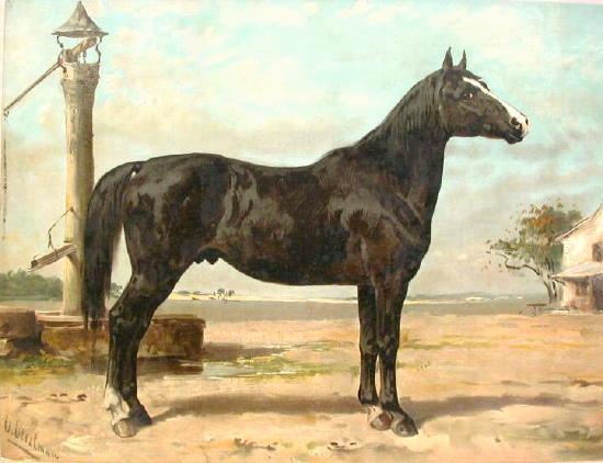 Hungarianhorse.jpg