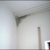 Penészedik a falam, de miért? 1. rész