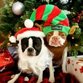 Karácsonyi állatstop