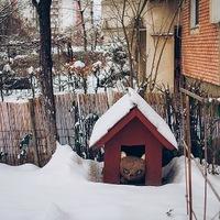 Erdélyi tél az állatorvostól