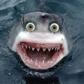 Halacska vagy cápa - a SharkScope tálalásában II.