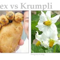 Az Index szerint a krumpli csúnya