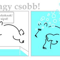 Polármackó úszik
