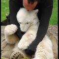 Knut (2006.12.05 – 2011.03.19)