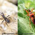 A poloskákról általában, valamint miért nem bogarak