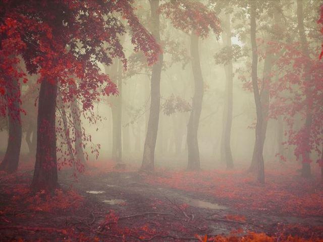 A csodagyermek - Halál nélküli Köd