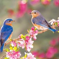 Ezt a mesét mondd el a madarak és fák napján!