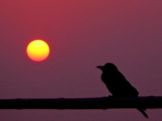 A madarak királya