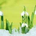 Böjtmás hava - jeles napok márciusban
