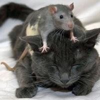Miér haragszik a kutya a macskára? A macska az egérre?