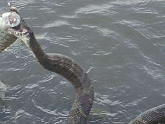 Akígyó meg a hal