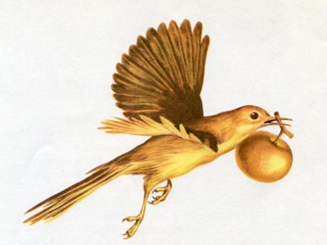 Az aranymadár