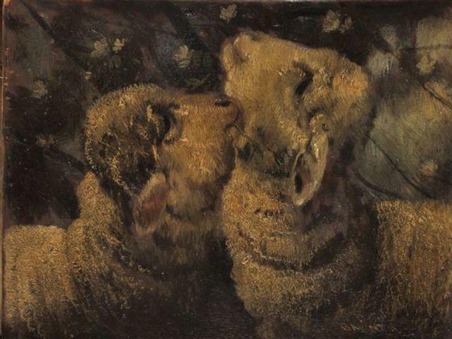 A szúrós szőrű bárányok