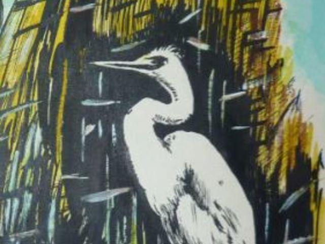 Az igazságtévő kócsag madár