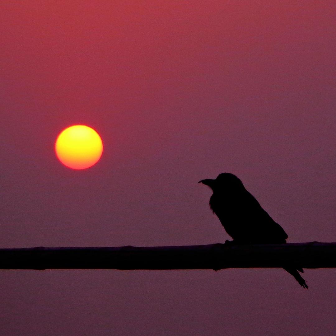 beige_and_red_bird_poem_instagram_post_1.jpg