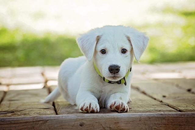 puppy-1903313_640.jpg