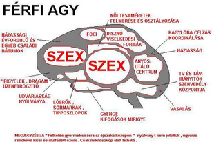 Robert Dubac: A férfi agy