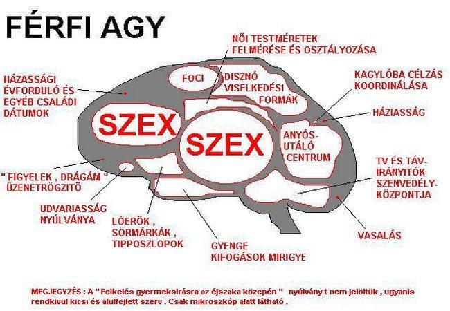 agyferfi.jpg