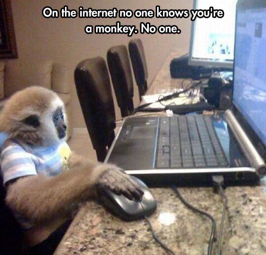 funny-on-the-internet-no-one-knows-you-re-a-monkey-01.jpg
