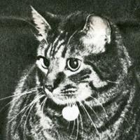Macskák szolgálatban