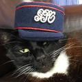 Postás Macska Kerestetik!
