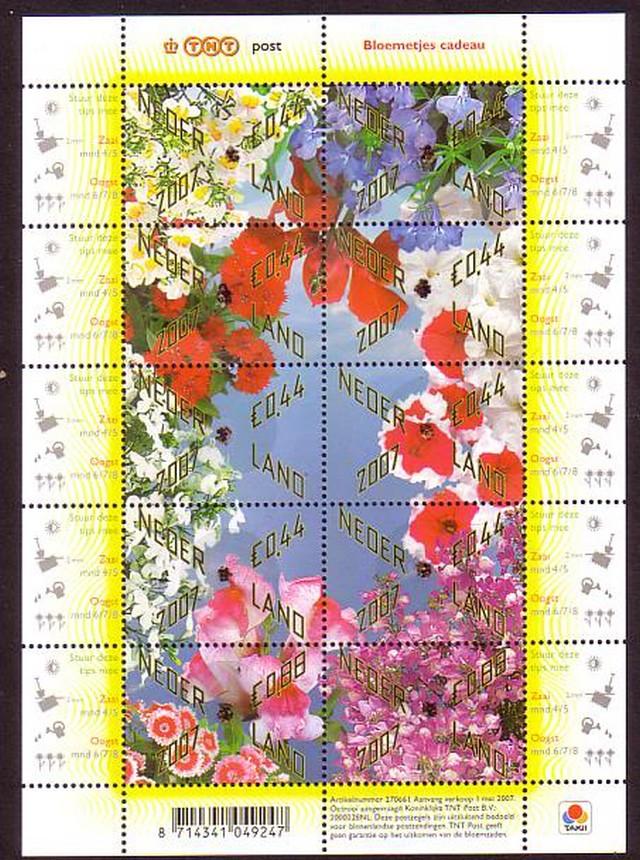 virág holland.jpg