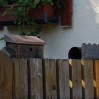 Kerítés mögül kukucskáló ládák