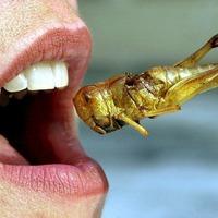 Entomofág étrend