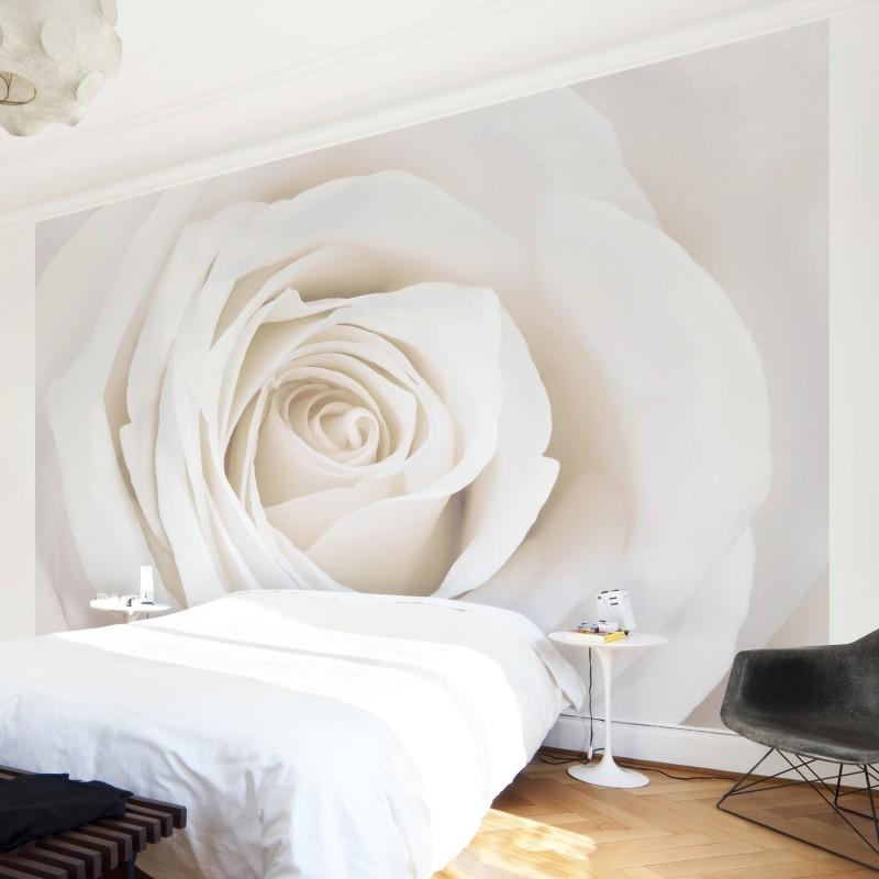 Minimal rózsa poszter tapéta