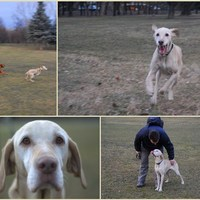 Boldogságos szabad kutya