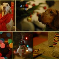 Szép karácsonyt mindenkinek :)