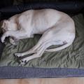 Az ágy közös a párna nem...