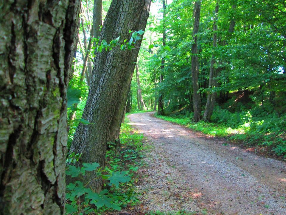 forest_hill_03.jpg