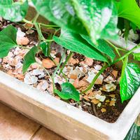 Komposzt, eleség, rovarriasztó: ennyi mindenre jó a tojáshéj