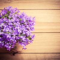 Szobába való balkonnövények