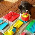 Szimatszőnyeg és falatadagoló: csináld magad filléres játékok házi kedvenceknek