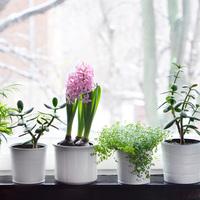 """""""Tavaszi"""" hobbikertészkedés"""