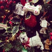 Így díszítsd fel a karácsonyfádat: ezek a 2014-es trendek