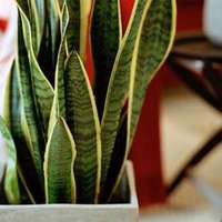 7 csodás szobanövény, amelyhez elegendő kezdő kertésznek lenned!