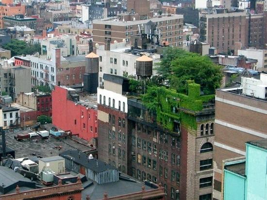 rooftop-garden-new-york.jpg